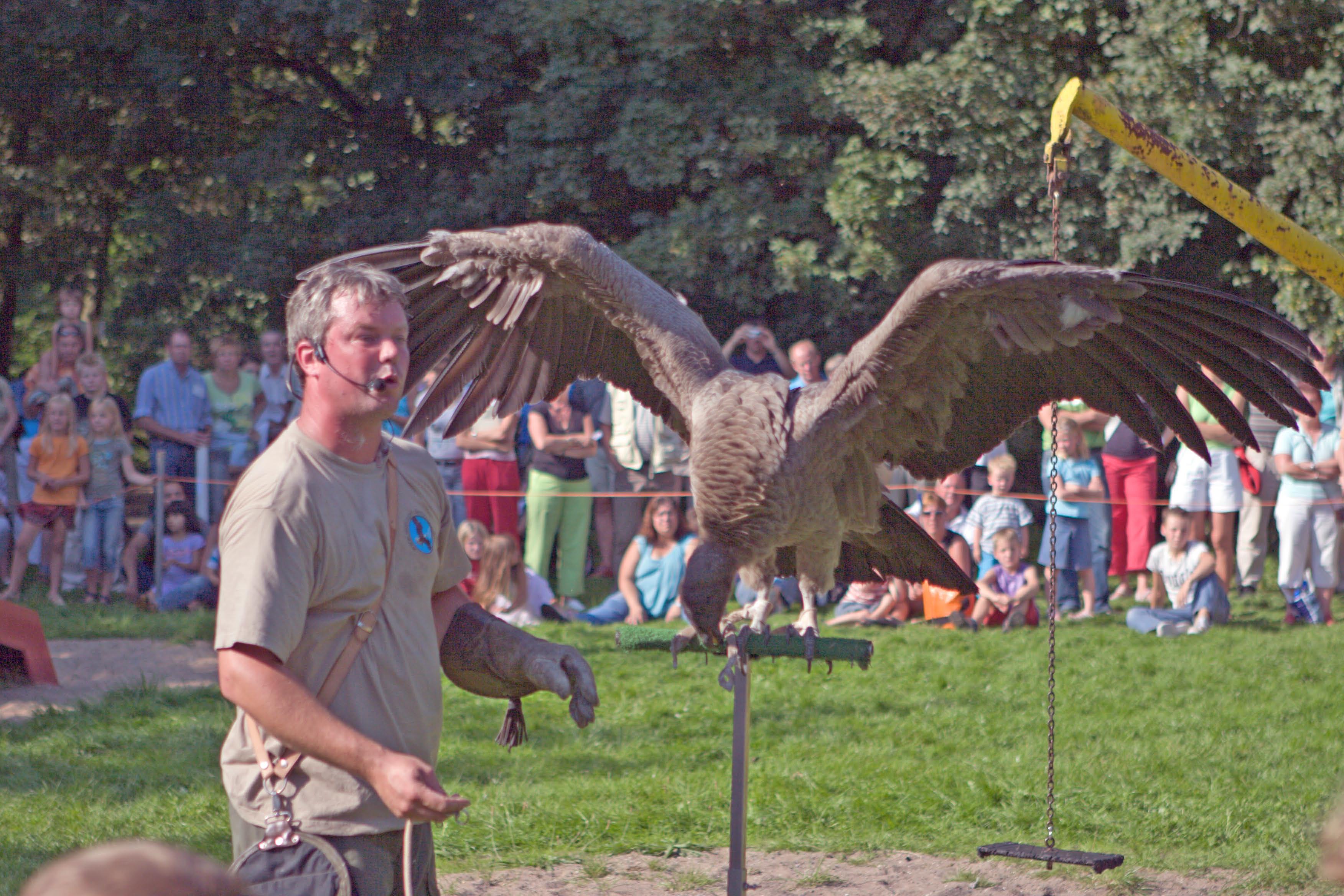 Roofvogelshow De Boshoek