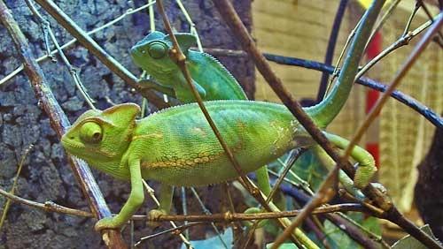Paranormaal- , sieraden- en reptilicabeurs in Gorinchem